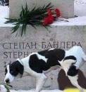 piesek potraktował właściwie  pomnik szefa UPA STEPANA BANDERY